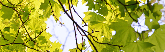Blätter_NEU